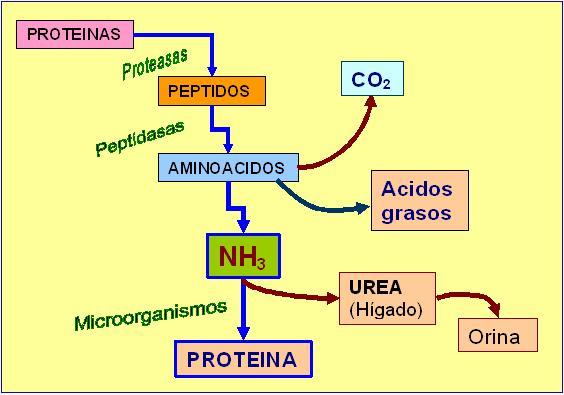 Sé el primero en leer lo que dicen los expertos sobre Metabolismo y nutricion