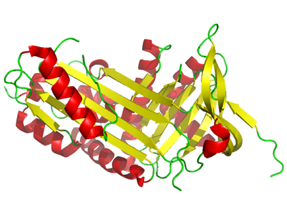 corticosteroid-binding-globulin