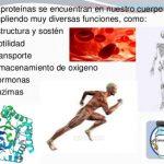 ¿Cuál es la función de las proteínas en el organismo?