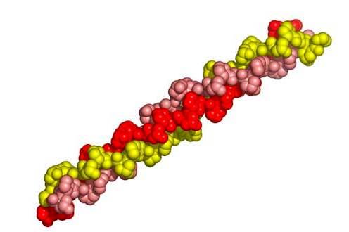 ¿Qué son las proteínas fibrosas?