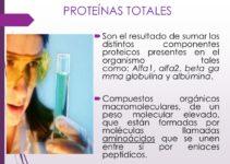 ¿Qué son las proteínas totales?